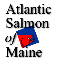 Atlantic Salmon of Maine