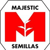 Majestic Semillas